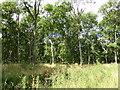 TF0529 : Ash Trees by Bob Harvey