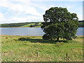 NY9952 : Mature tree by Derwent Reservoir by Pauline E