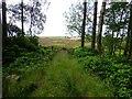 NU0703 : Track leaves Cragside Estate by Russel Wills