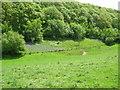 SO3763 : Shobdon western boundary-Herefordshire by Martin Richard Phelan