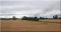 N8219 : Fields and trees near Barretstown by Ian Paterson