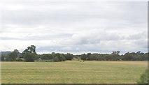 N8117 : Fields west of Newbridge Golf Club by Ian Paterson