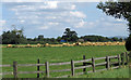 SE6551 : Farmland off Elvington Lane by Pauline E