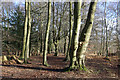 TQ4432 : Woodland, Ashdown Forest by Robin Webster