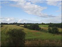 N4021 : Field, hedge.  Hedge, field. by Ian Paterson