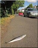 SX9065 : Fish, Cricketfield Road, Torquay by Derek Harper
