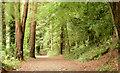 J3469 : Path, Belvoir forest, Belfast - August 2014(1) by Albert Bridge