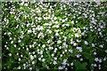 SJ9170 : Pink Purslane by Dave Dunford