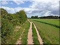 SX9291 : Footpath by Trews Weir allotments by David Smith