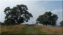 NY9569 : Hadrian's Wall Path near Greenfield by Anthony Parkes