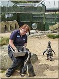 TA0390 : Sea Life Centre, Scarborough, Yorkshire by Christine Matthews