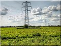 SK8842 : Pylons Across the Potato Fields by David Dixon