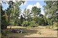 SJ8071 : Jodrell Bank Granada Arboretum by Jeff Buck