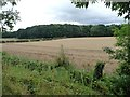 SE5202 : Wheatfield, south side of Melton Road by Christine Johnstone