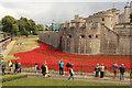 TQ3380 : Tower poppies by Richard Croft