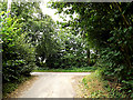 TM3097 : Green Man Lane, Kirstead Green by Adrian Cable