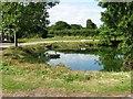 TQ3330 : Tillinghurst Farm pond by Alex McGregor