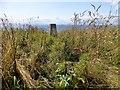 NT4699 : Kincraig Hill Trig by Rude Health