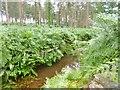 SU2012 : Alderhill Inclosure, Latchmore Brook by Mike Faherty