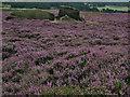 SK2681 : Burbage Moor by Stephen Burton