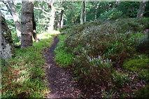 SX4663 : Permissive path through Blaxton Wood by jeff collins