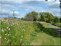 TQ1372 : Flowery bank, Crane Park by Robin Webster