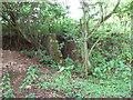 TM4488 : Overgrown blast shelter by Evelyn Simak