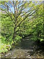 SX3170 : River Lynher at Kerney Bridge by Derek Harper