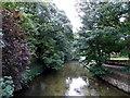 SU1429 : Riverside trees in Salisbury by Jaggery