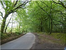 ST0906 : Broad Road through the woodland by David Smith