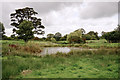 SJ8977 : Cheshire scene with pond by Anthony O'Neil