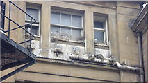 NZ2563 : Kittiwakes nesting on the old Guild Hall in Newcastle upon Tyne by Jeremy Bolwell