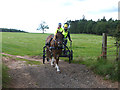 NY5741 : Pony and trap near Howscales Farm by Oliver Dixon