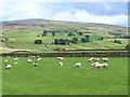 NY5843 : Field with sheep near Renwick by Oliver Dixon