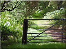 ST1006 : Footpath to Broadhembury from North Hill by David Smith