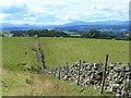 NY6042 : Fields and stone wall near Raven Bridge by Oliver Dixon