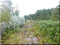 SY8187 : Winfrith Heath, disused railway line by Mike Faherty