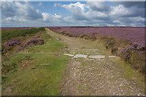 SE8493 : Tabular Hills Walk above the Hole of Horcum by Pauline E