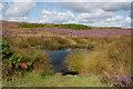 SE8393 : Seavy Pond by Pauline E