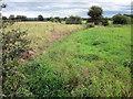 SJ4557 : Mere Brook near Handley by Jeff Buck