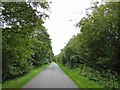 TF2494 : A tree lined lane near Scallows Hall by Steve  Fareham