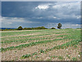 TQ0650 : Field by Staple Lane by Alan Hunt