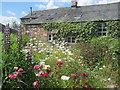 NY6615 : Summer flowers at Brook Farm by David Medcalf