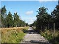 SE4698 : Forestry road near to Cod Beck Reservoir by Trevor Littlewood