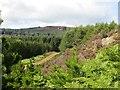 NN9246 : Road, Griffin Forest by Richard Webb