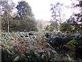 NJ6001 : Bracken in Footie Wood by Stanley Howe