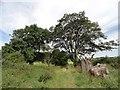 NZ1854 : Path below Tanfield Leith Farm by Robert Graham