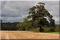 SE6676 : Mature oak tree by Pauline E