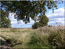 SU6022 : South Downs Way, Winchester to Exton (164) by Basher Eyre