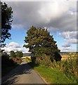 NJ6101 : A 'conker' tree near South Footie by Stanley Howe